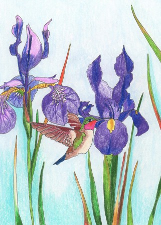 Iris Garden Image